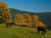 sumava-podzim-na-srni-pavel-kavale-3